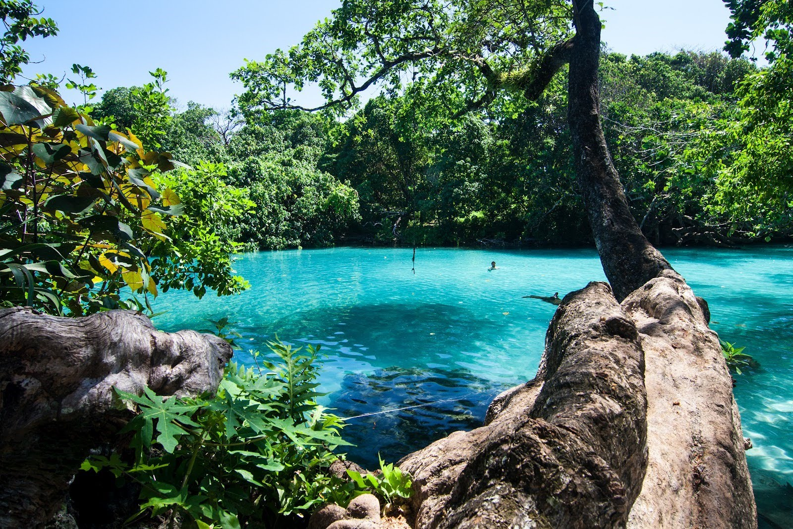 The Best Of Blue Lagoon In Portland Jamaica